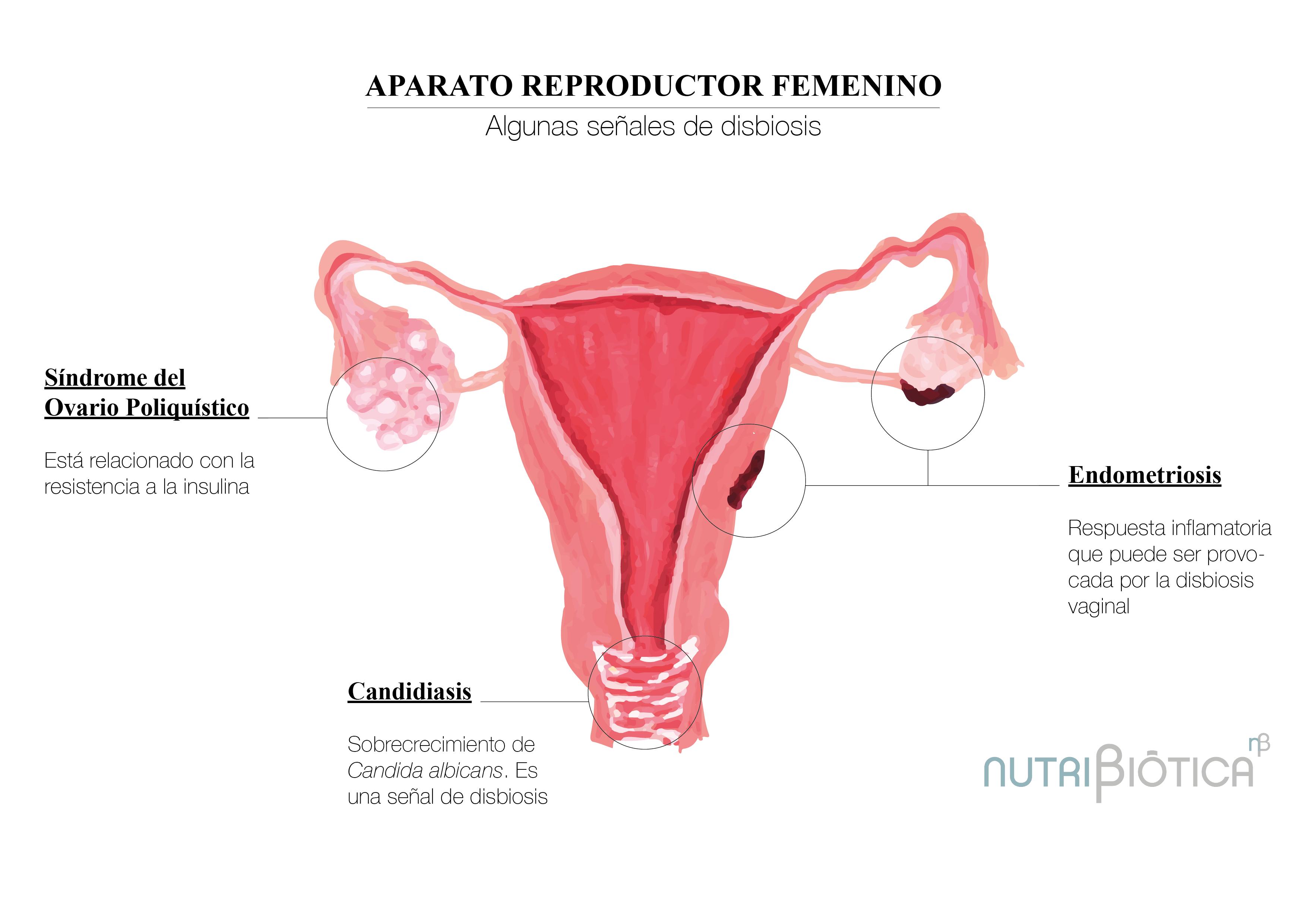 Salud femenina y bacterias, una simbiosis clave en el bienestar de la mujer 1